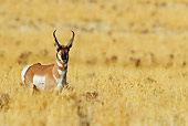 WLD 21 TL0011 01