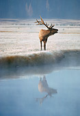 WLD 22 BA0003 01