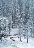 WLD 22 BA0005 01