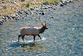 WLD 22 BA0006 01