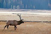 WLD 22 BA0007 01