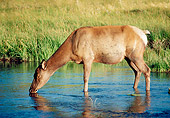 WLD 22 GR0001 01