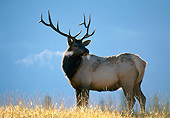 WLD 22 KH0001 01