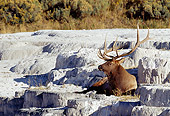 WLD 22 MC0005 01