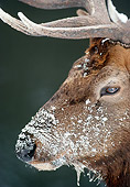 WLD 22 MC0006 01