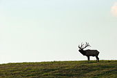 WLD 22 MC0015 01