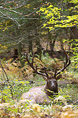 WLD 22 MC0016 01