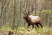 WLD 22 MC0017 01