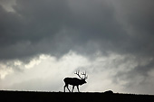 WLD 22 MC0018 01