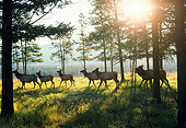 WLD 22 NE0007 01