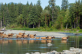 WLD 22 TL0016 01