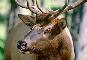 WLD 22 DB0006 01