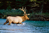 WLD 22 DB0007 01