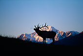 WLD 22 DB0009 01