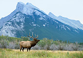 WLD 22 DB0012 01
