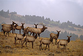 WLD 22 DB0019 01