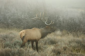 WLD 22 NE0001 01