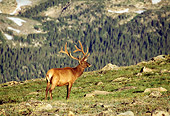 WLD 22 RF0011 01