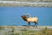 WLD 22 RF0013 01