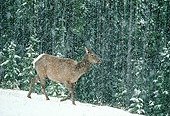 WLD 22 TK0003 01