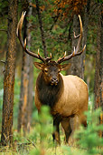 WLD 22 TL0003 01