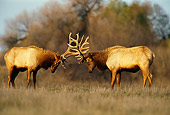 WLD 22 TL0004 01