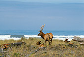WLD 22 TL0006 01