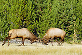 WLD 22 TL0008 01