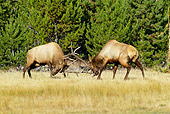 WLD 22 TL0009 01