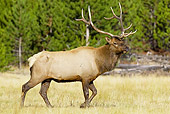 WLD 22 TL0011 01