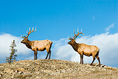 WLD 22 TL0014 01