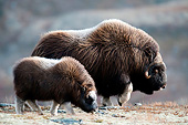 WLD 23 AC0005 01