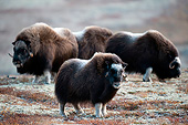 WLD 23 AC0006 01