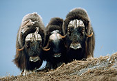 WLD 23 BA0001 01