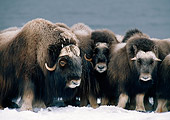 WLD 23 BA0002 01
