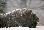 WLD 23 TL0002 01