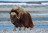 WLD 23 TL0005 01