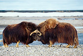 WLD 23 TL0006 01