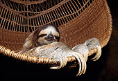 WLD 24 WF0001 01