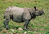 WLD 25 TL0001 01