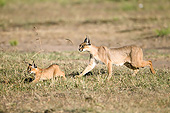 WLD 26 MC0001 01