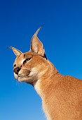 WLD 26 MH0002 01