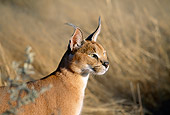 WLD 26 MH0003 01