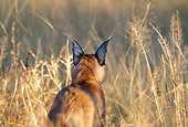WLD 26 MH0005 01