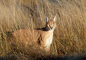 WLD 26 MH0006 01