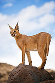 WLD 26 MH0008 01