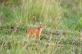 WLD 26 NE0001 01