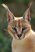 WLD 26 TK0002 01