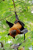WLD 27 AC0001 01