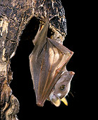 WLD 27 JE0001 01